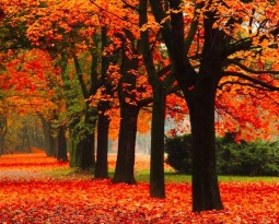 Herfstdip en hooggevoeligheid